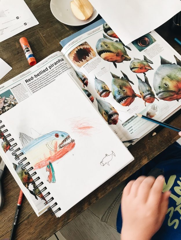 AA child draws a fish in his science journal as part of his homeschool unit study.
